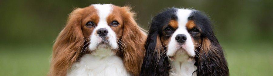 myrtle-beach-dog-grooming